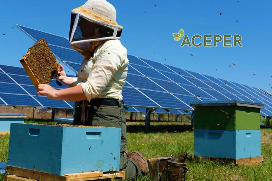 Api e biodiversità. Scende in campo l'energia pulita: le Solar Farm